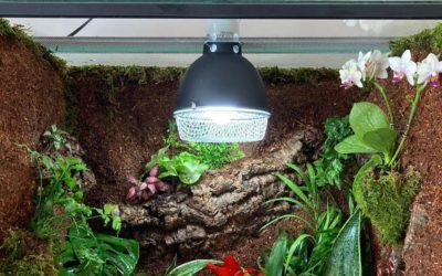 De juiste verlichting en warmte voor reptielen en amfibieën met Trixie